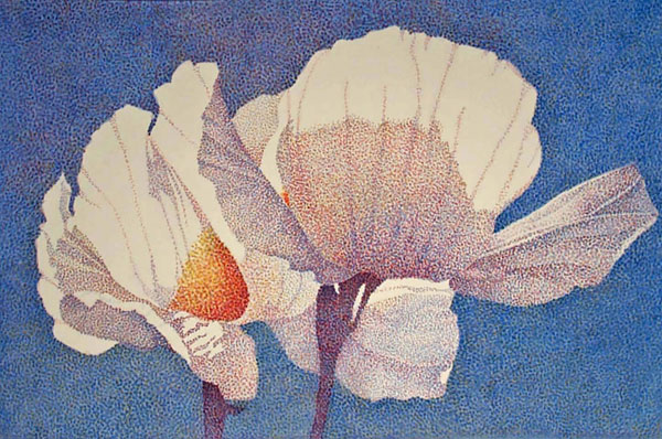 Carol-Lutz-Matilija-Poppies