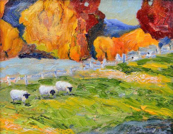 hanna-sheep