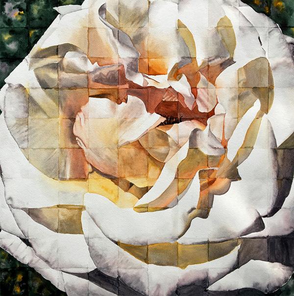 Hunter-Rose-(w)