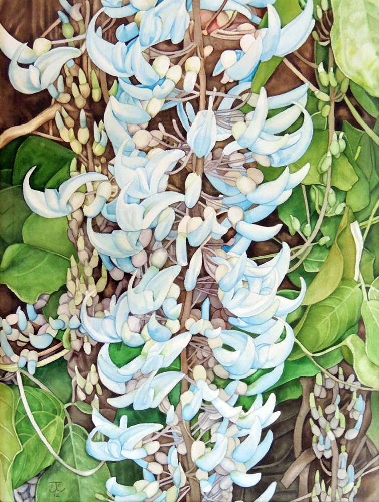 collins-blue-jade-vine(w)