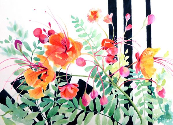 McCargar-Red-Bird-of-Parasise-(w)