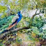 Glorious, watercolor by Catherine McCargar